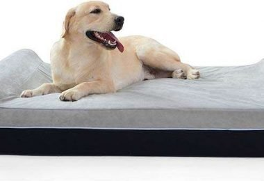 Best orthopedic dog bed for large breeds
