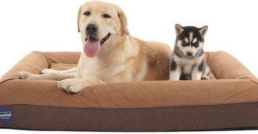 Best Orthopedic Dog Bed Arthritis