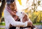 dogs for elderly companionship